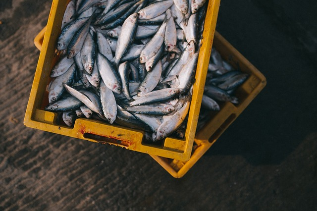 Fish capture